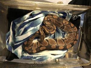 large snake on cloth